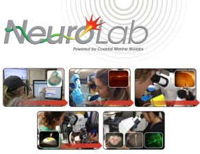 NeuroLab M3: Discovery-Based Explorations of Scientific Models Model Organisms and Model Systems in Developmental Neuroscience